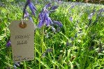 Lauriston Castle Apr label KC bluebells